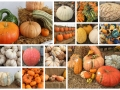 LargePumpkinCollage