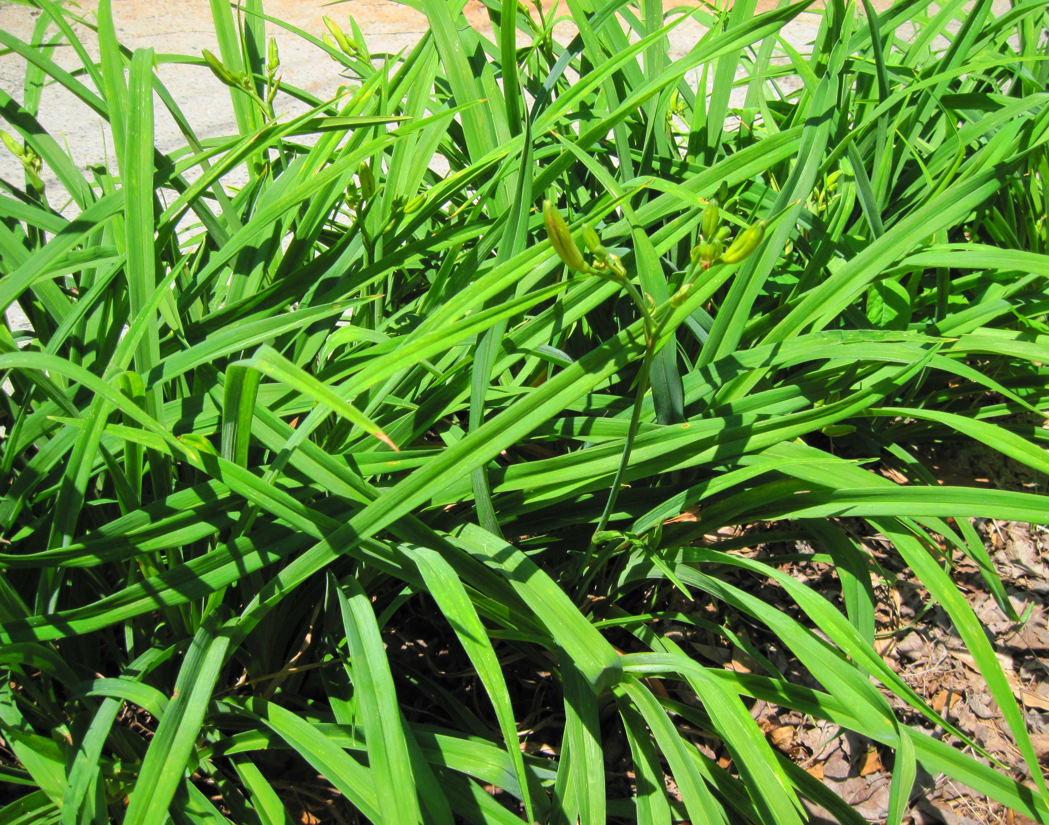 Let S Start With The Most Obvious Ground Cover First If You Have A Lawn Bermuda Grass Aka Devil Probably Because Of Its