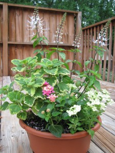 This container garden's needs will depend on several factors