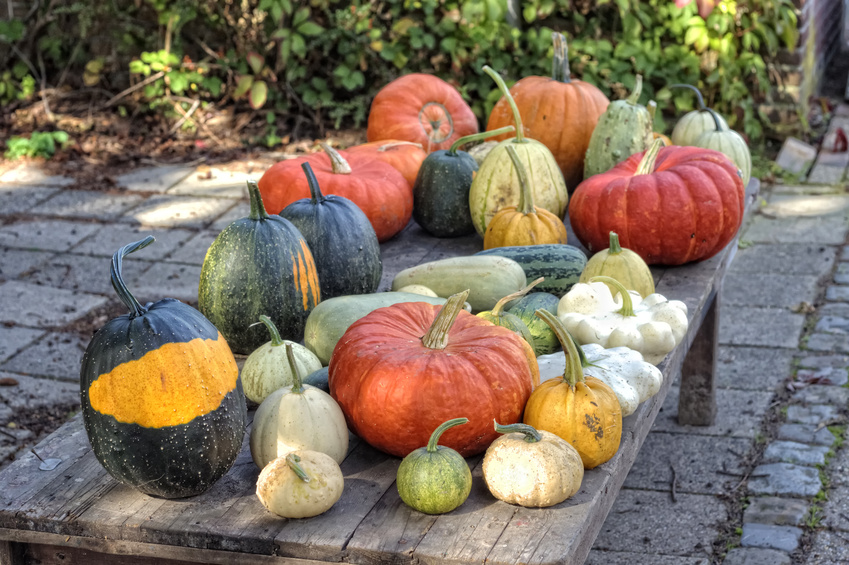 An assortment of pumpkins and winter squashes.