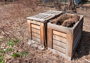 Wooden compost bins with discarded potting soil and annuals.