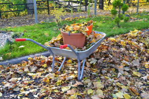 Fall is the best time to gather all the brown materials needed for continuous composting during next year's gardening season.