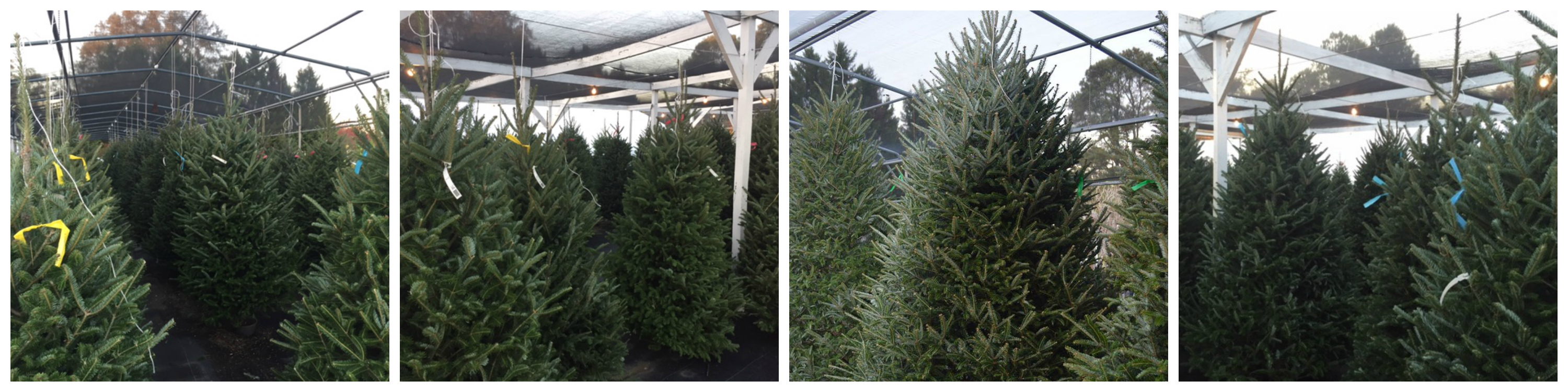 benefits of a real christmas tree - How Much Do Real Christmas Trees Cost