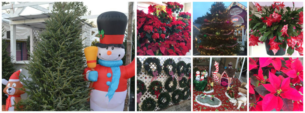 facebook-christmas-collage-banner-copy