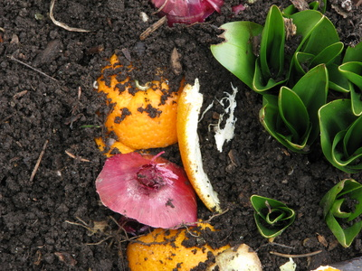 Composting directly into the garden.