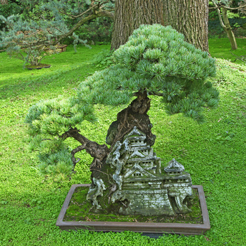 The ancient art of bonsai may have inspired fairy gardening.