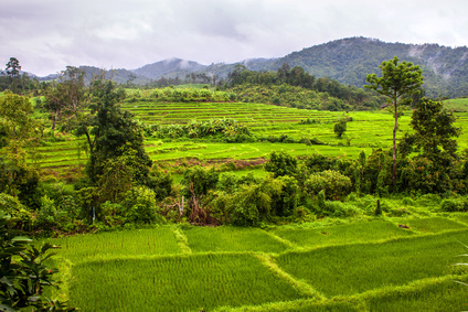 Rice fields in northern Thailand, created using ages-old traditional methods of farming.