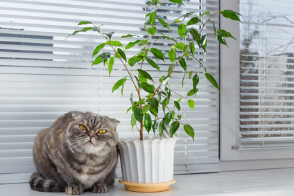 Not Every Ficus Gets Its Own Guard Cat Make Sure Your Pets And Small Children