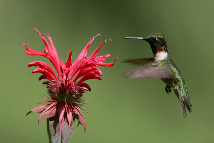 Birds play an important role in pollination as well.