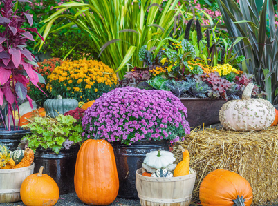 Incorporate ornamental (aka flowering) kale, pansies, and snapdragons into your outdoor fall decorations.