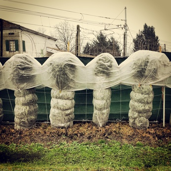 Wrapping a treasured shrub or flowering plant protects it from frost, but to protect it from super cold temperatures, an insulated wrap is required.
