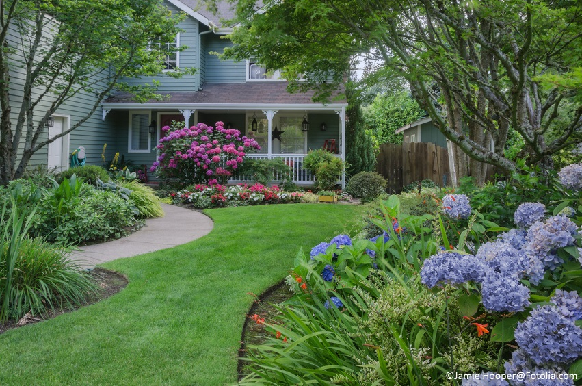 Entrance to a home through a beautiful garden, highlighted by rose and blue hydrangeas.