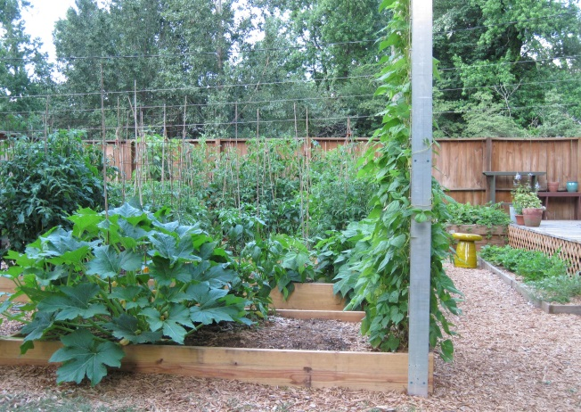 There's plenty of work to be done in the vegetable garden in June.