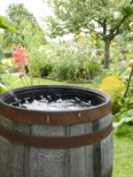 Rain barrels are simply any container that will hold water and can be situated within reach of a downspout diverter.