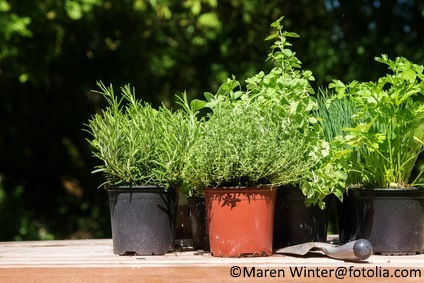 It's time to transplant certain herbs that aren't so readily started from seed in the garden.
