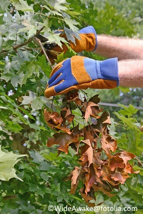 Now is the time to remove branches or portions of branches that haven't leafed out.